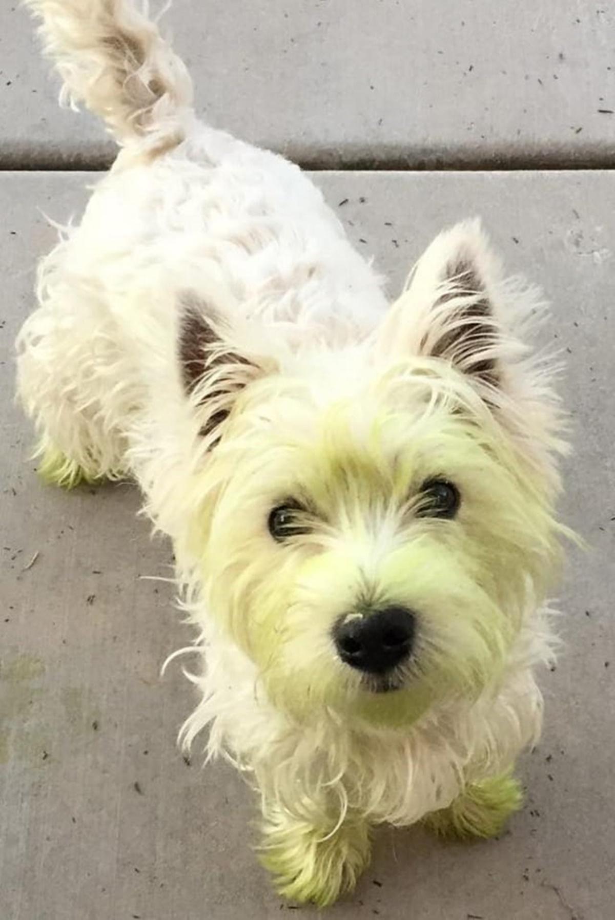 cane faccia verde