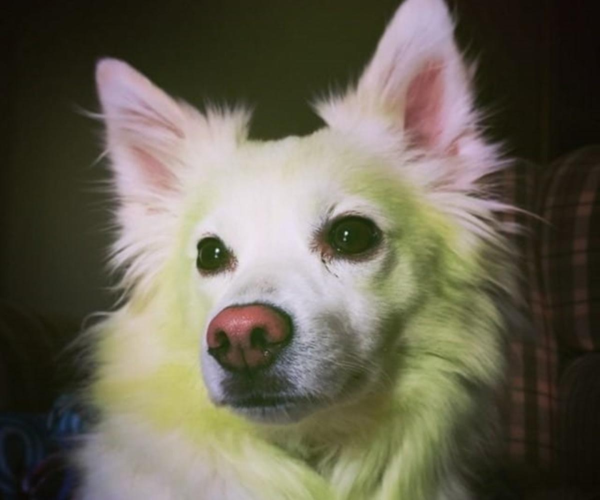 cane contorno verde