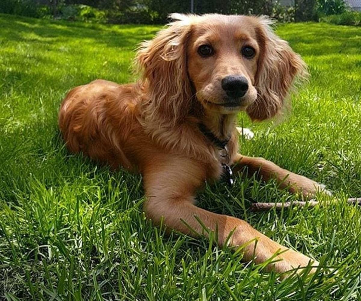 cane nell'erba
