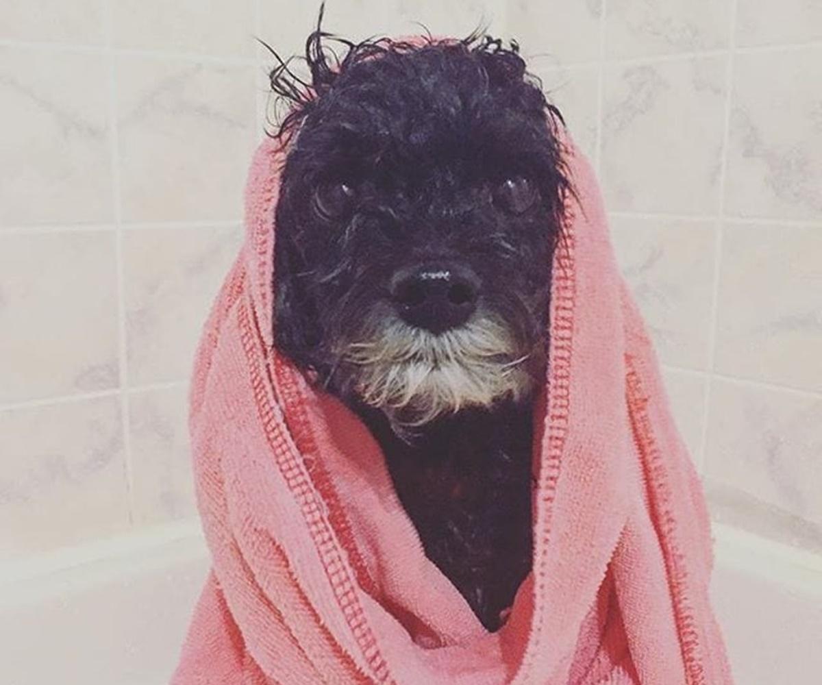 cane si asciuga