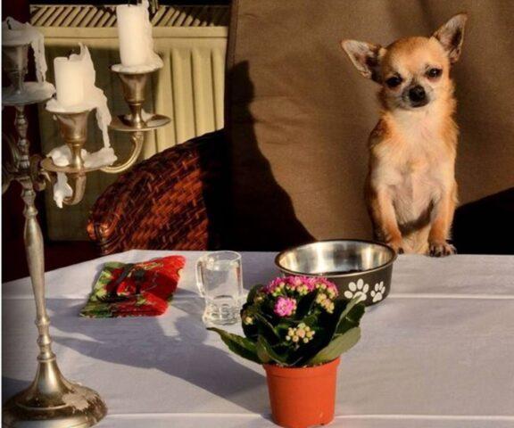 cane ti aspetta a cena