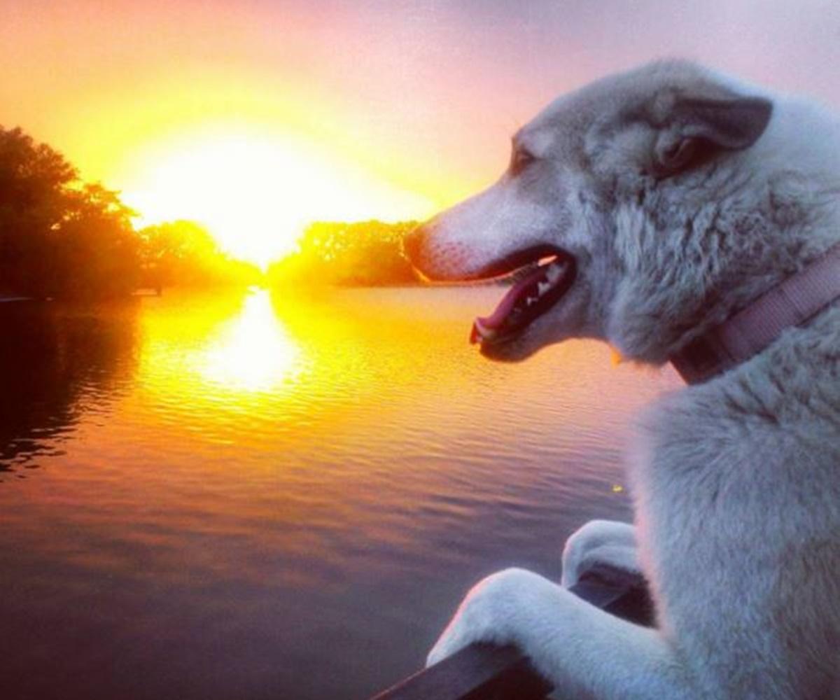 cane panorama