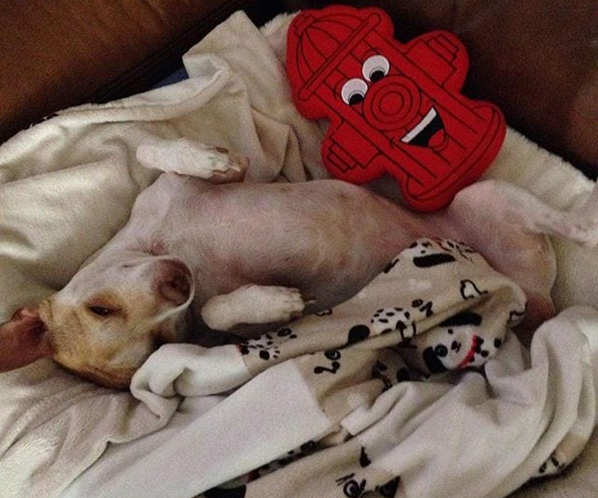 cane dorme con pupazzo