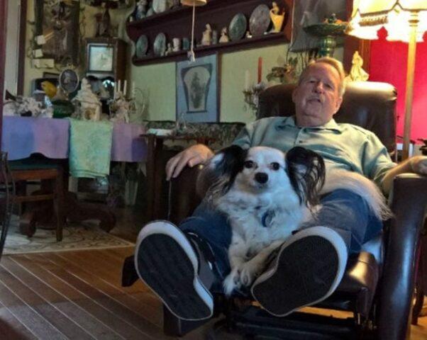 cane poltrona papà