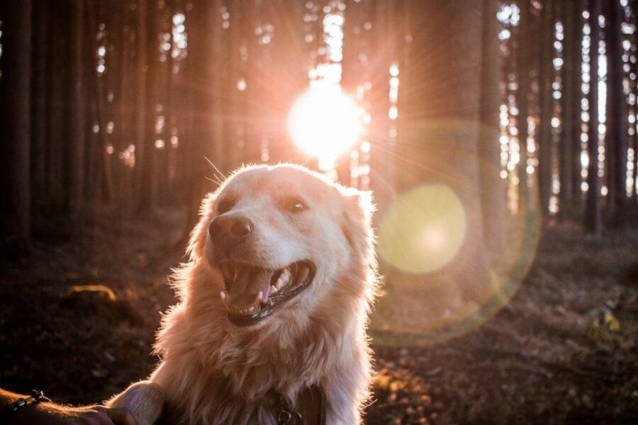 cane tramonto sole