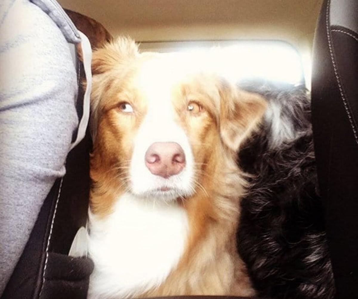 cani sorvegliano