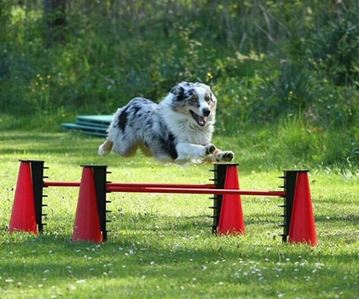 cane agile