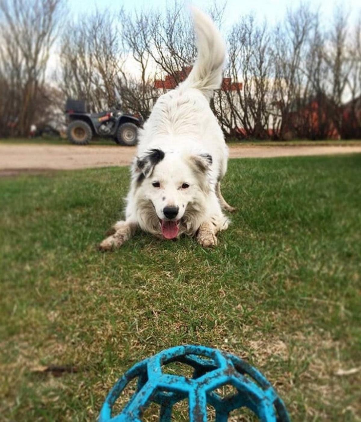 cane aspetta palla