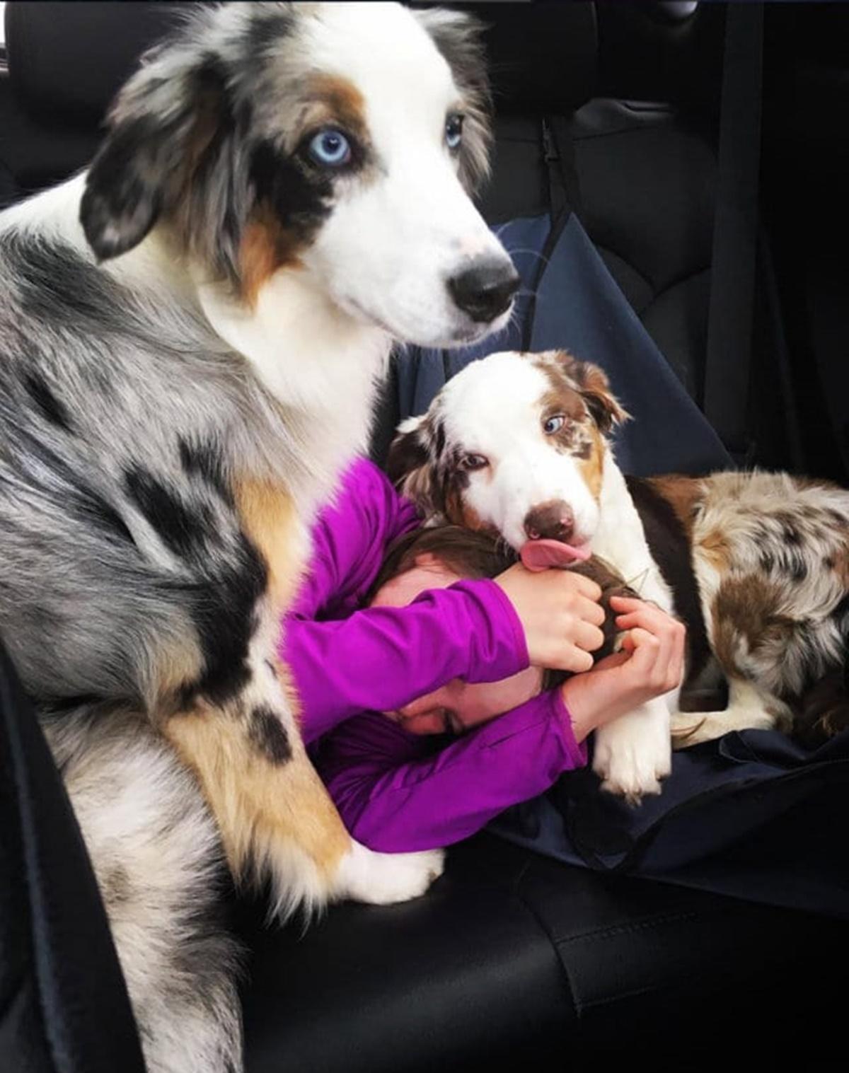 cani proteggono padrona