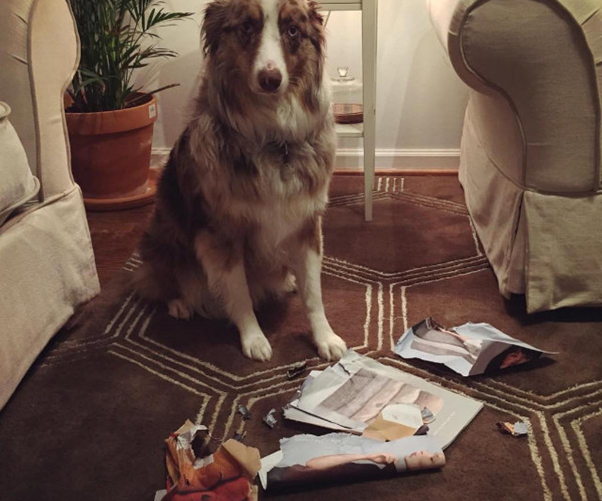 cane giornale