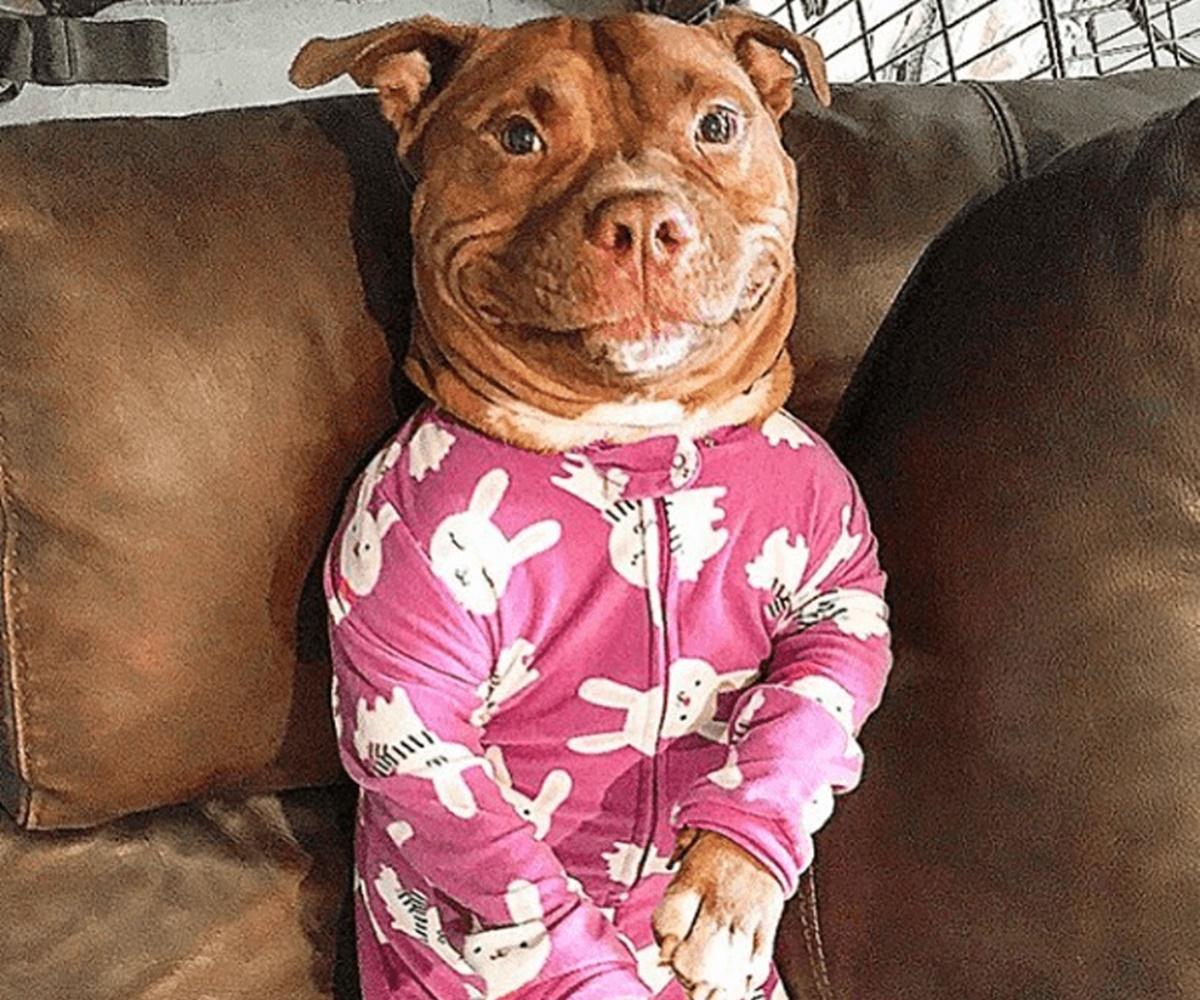 cane pigiama