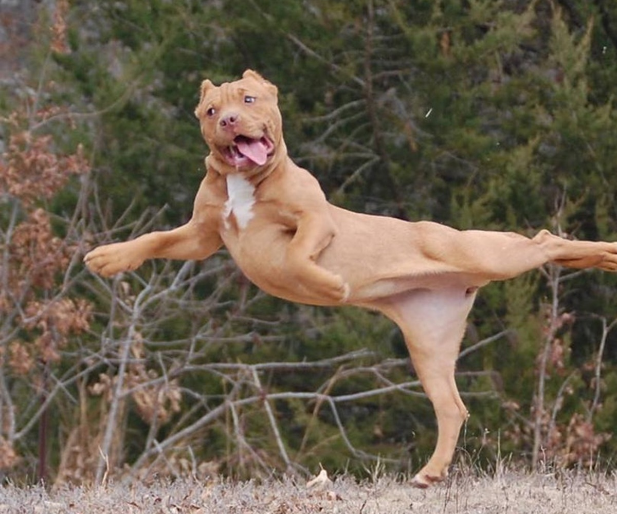 cane ballerino