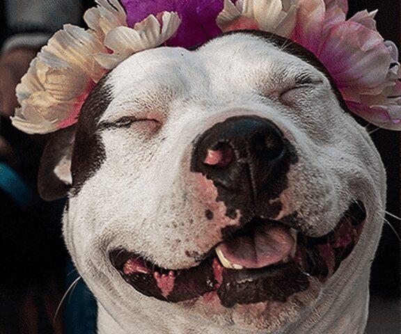 cane felice con fiori
