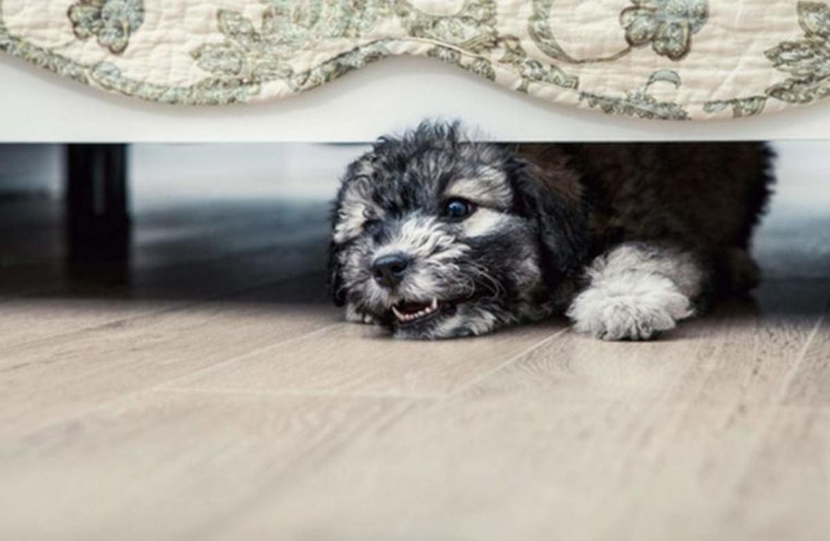 cane sotto letto