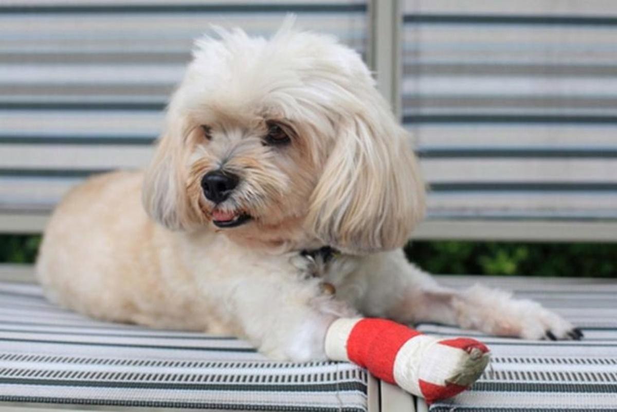 cane ferita