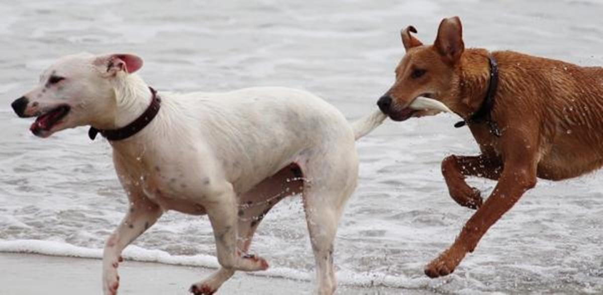 cane morde coda