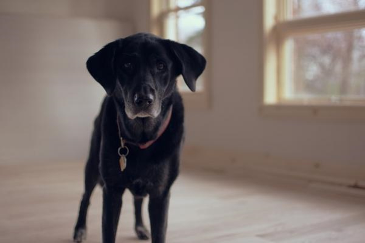 cane stanza