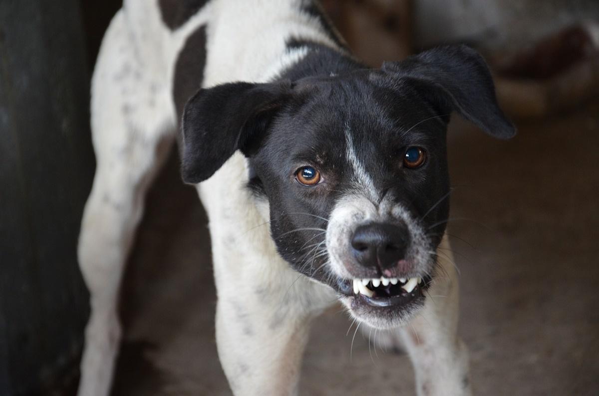 cane sguardo brutto