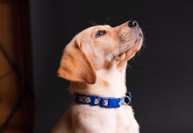 cane osserva testa