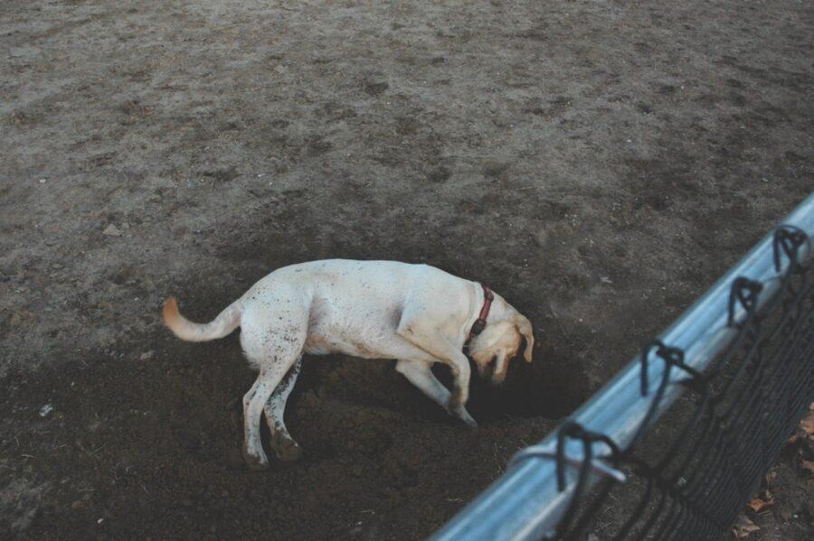 cane terreno ricercare