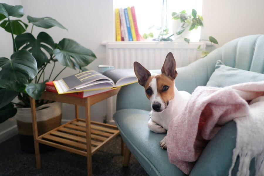 cane divano coperta