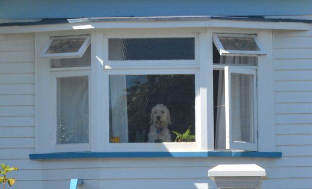 finestra cucciolo peloso