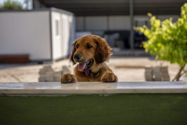 cane dolce zampe