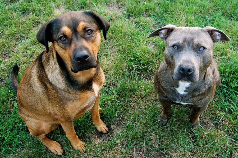 cani giardino insieme