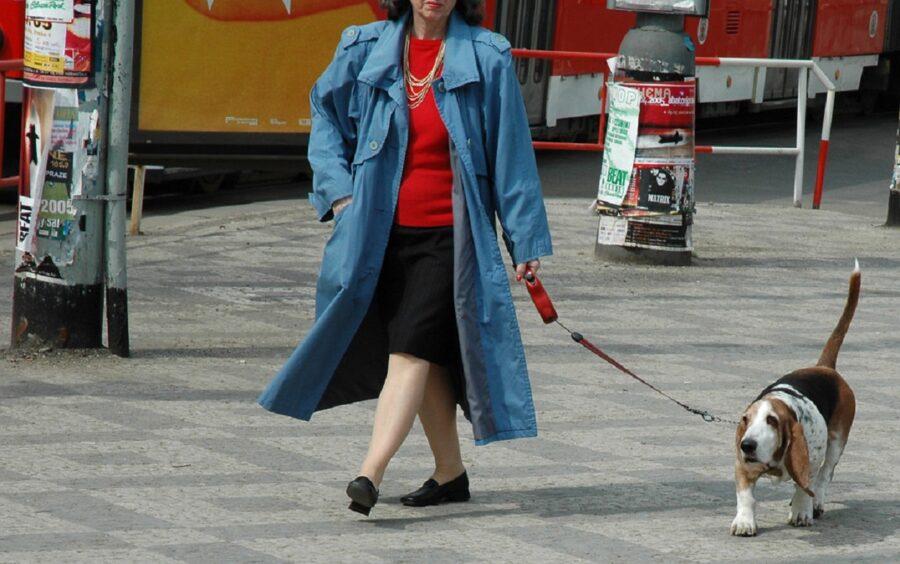 cane cammina mamma