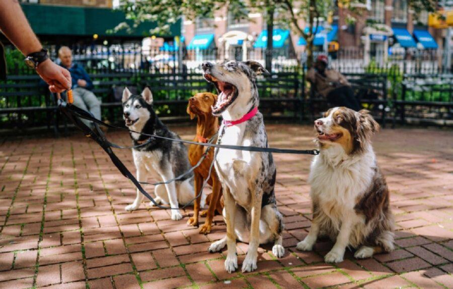 cani cuccioli squadra