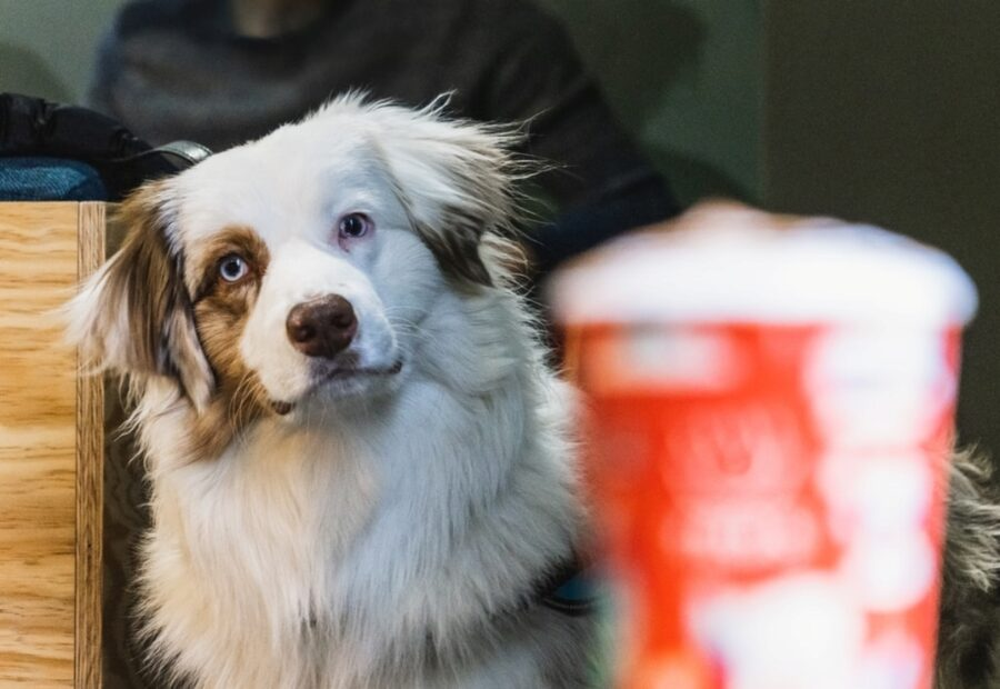 cane guarda lattina