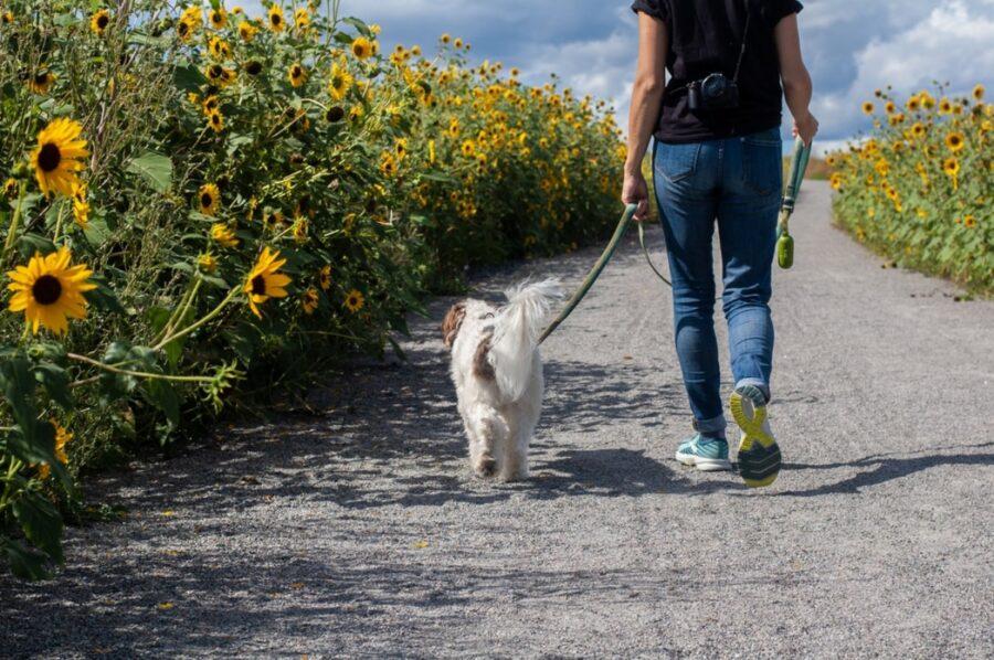 cane cammina fiori