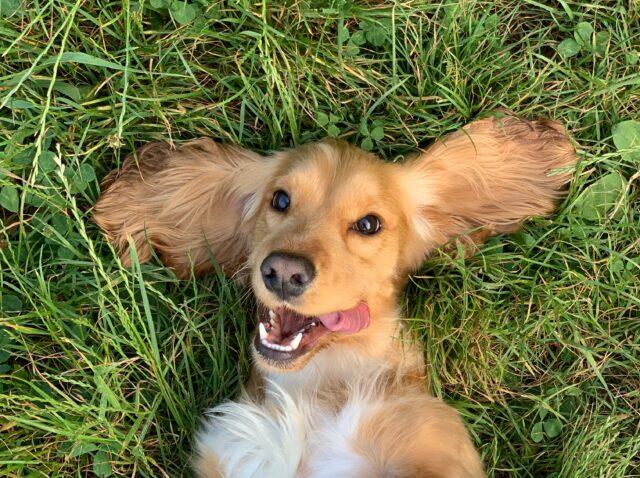 cane sorride prato
