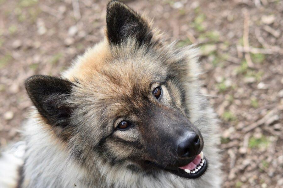 cane stupendo natura