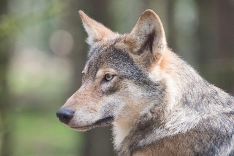 cane selvatico natura