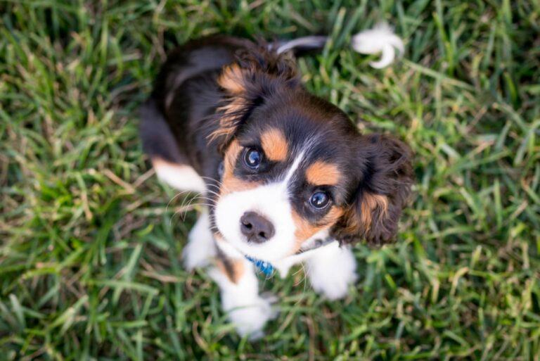 cane prato erba