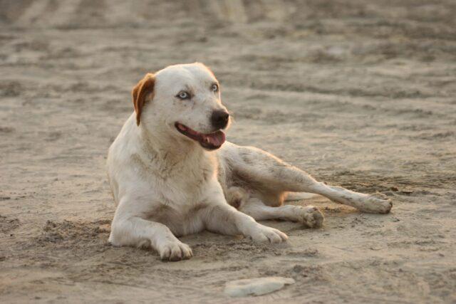 cucciolo sabbia relax