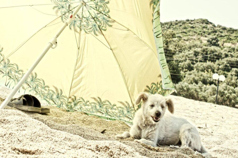 cane ombrello tenero