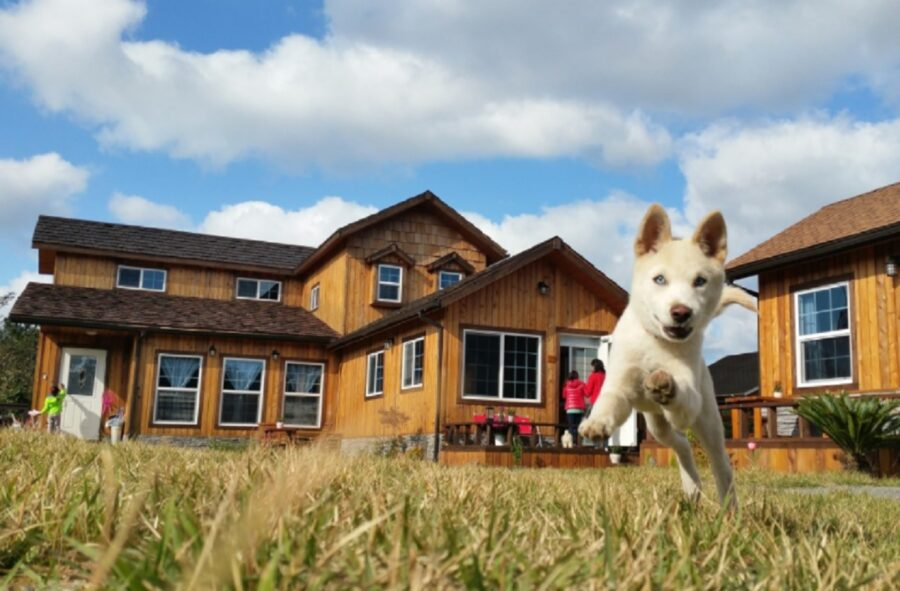cane giardino felice