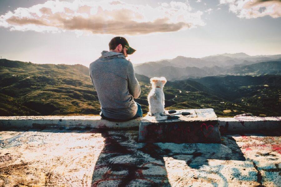 cane seduto panorama
