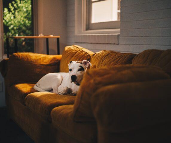 cane abitazione divano