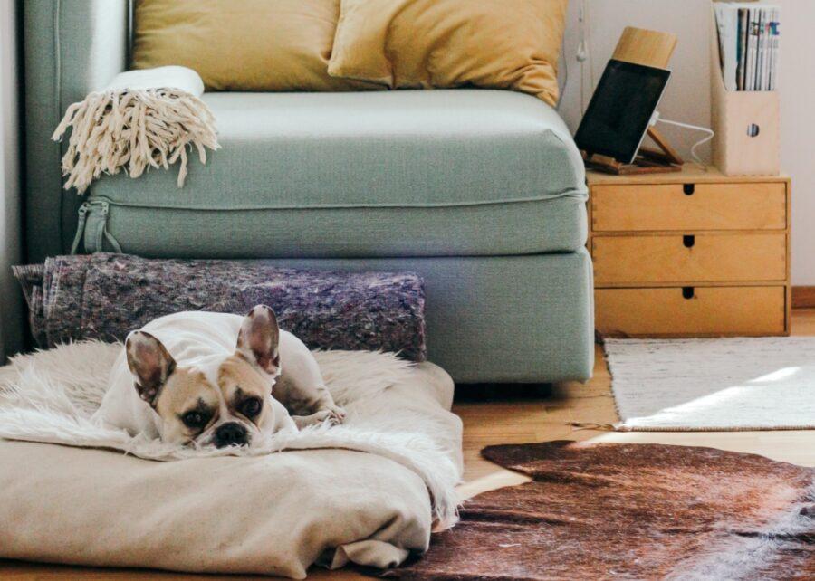 bulldog cuscino tenero