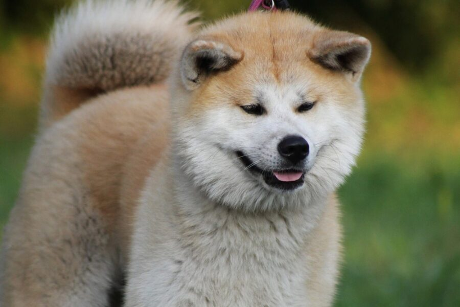 cucciolo stupendo dolce