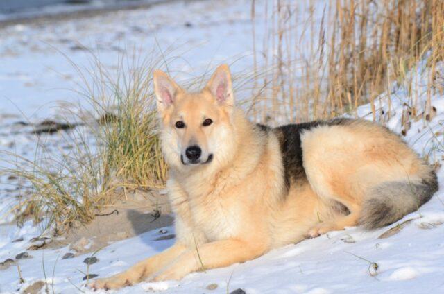cane stupendo neve