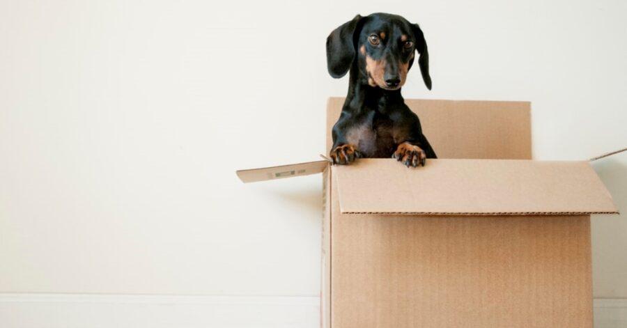 cucciolotto scatola dolce