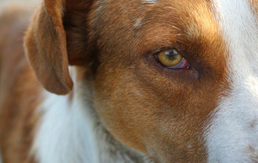 cane occhi dolci