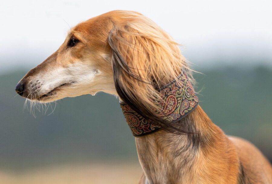 cane profilo muso