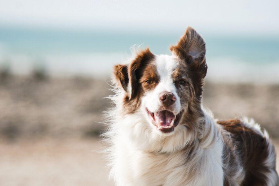 cane spiaggia tenero
