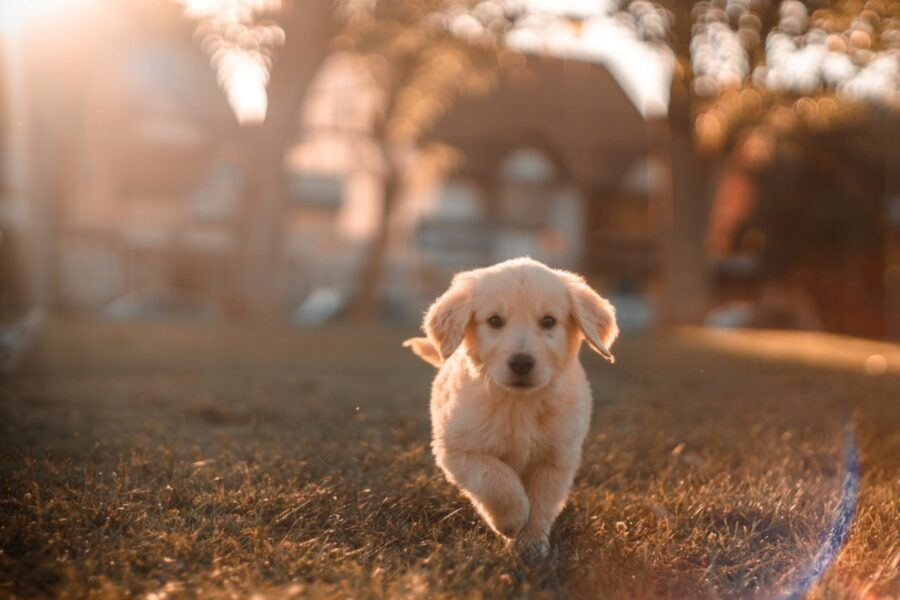 cane corre tramonto
