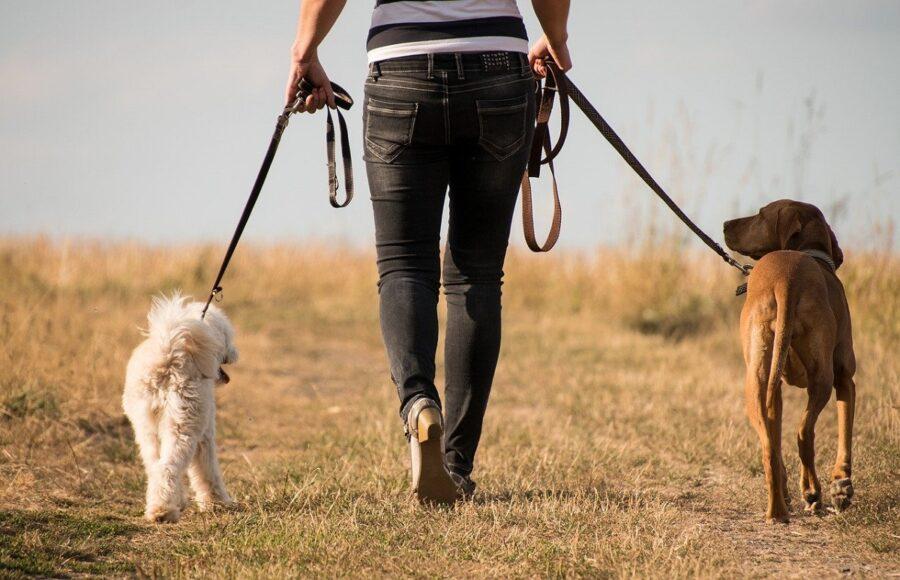 cani papà camminata
